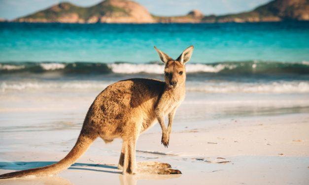 Visitor Visa Australia: Easy Visa with 100% Cashback