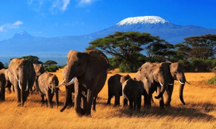 Hassle-free Kenya Visa Online with Cashback on Visa Fees