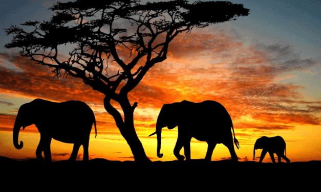 All About Kenya Tourist Visa