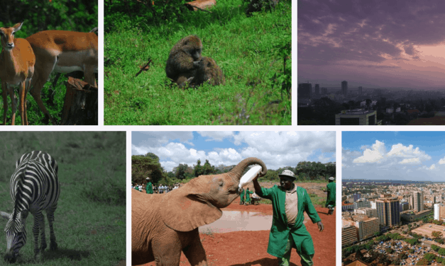 How to Save on Your Kenya Visa Fees?